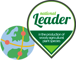 National leader, in the production of woody agricultural plant species